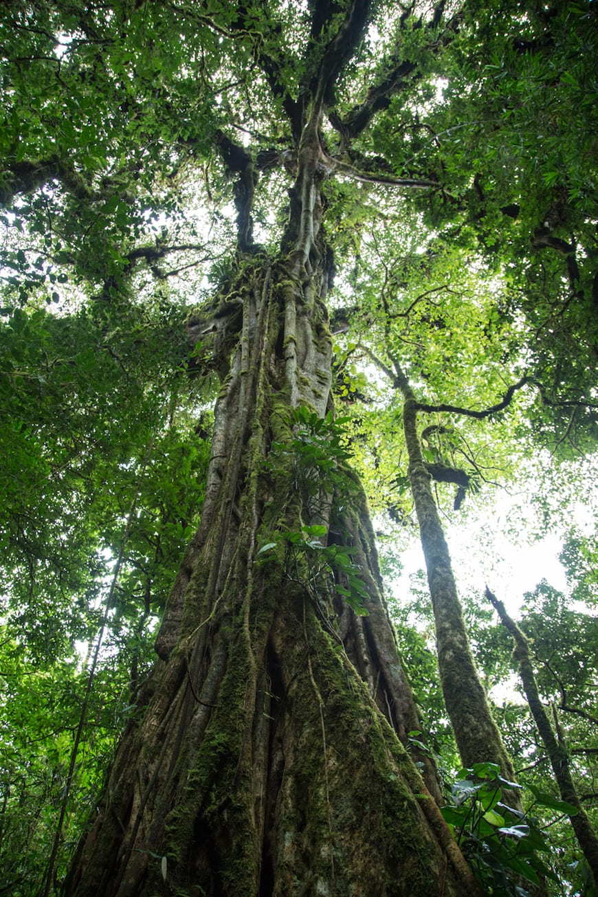 Costa Rica Adventure / Cloud Forest