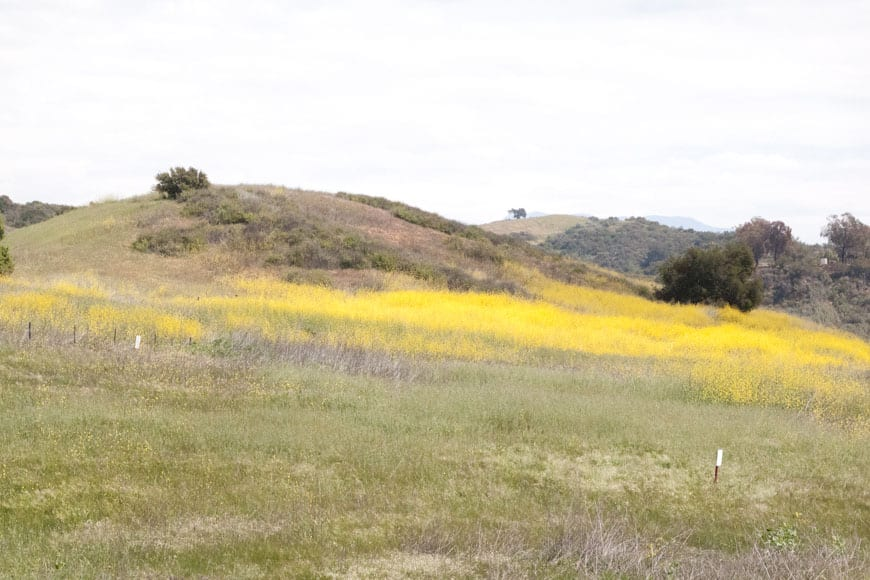 Paso Robles, CA: One the Road with What's Gaby Cooking