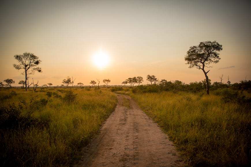 Gaby's Guide to Safari (South Africa + Botswana)
